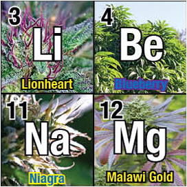 Periodic Table of Cannabis sample 1